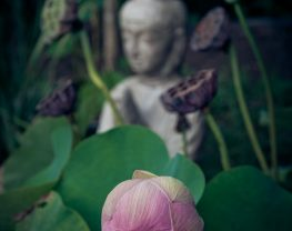 statue with a budding flower