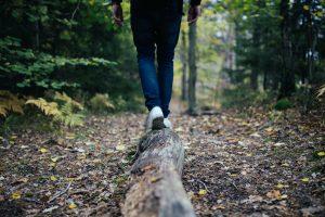 Someone walking on a broken tree branch